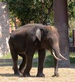 Elephant Thailand Stock Photos