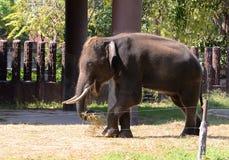 Elephant Thailand Stock Image