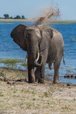 Elephant throwing dust over head beside river Stock Images