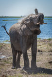 Elephant throwing dust over shoulder beside river Royalty Free Stock Photos