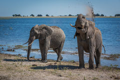 Elephant throwing mud over shoulder beside river Royalty Free Stock Images