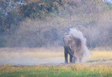 Elephant throwing sand over him after drinking water at Khwairiver stock image