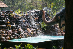 Elephant throwing water Royalty Free Stock Images