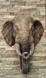 Elephant throws water on cement wall Stock Images