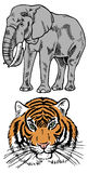 Elephant and tiger Stock Image