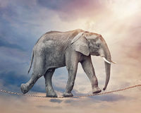 Elephant on a tightrope. Elephant walking on a tightrope Stock Photos