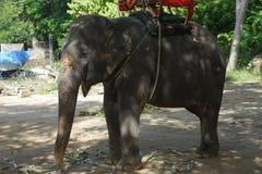 Elephant to elephant trekking in Thailand. Pattaya Stock Image