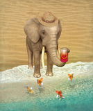 Elephant tourist with a can of apple juice and goldfish Stock Images