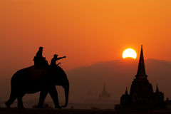Elephant tourist in thailand. In the evening Royalty Free Stock Photos