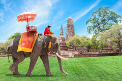 Elephant for Tourists in Ayutthaya, Thailand.  Royalty Free Stock Images