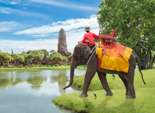 Elephant for Tourists ride tour on an of the ancient city old te. Mple Wat Praram in Ayutthaya. Thailand travel concept Royalty Free Stock Image