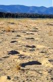 Elephant Tracks Stock Photo