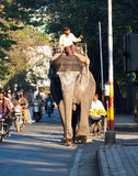 Elephant in traffic Royalty Free Stock Images