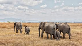 Elephant train royalty free stock photo