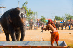 Elephant Trainer Splashing Water Stock Photo
