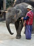 Elephant and Trainer Stock Photography
