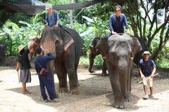 Elephant training and riding Stock Photos