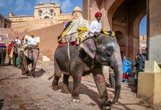 Elephant transport Royalty Free Stock Image