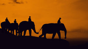 Elephant travel at mountain Stock Images