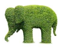 Elephant tree Stock Photography