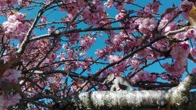 Elephant on tree Royalty Free Stock Image