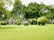 Elephant tree shape. Ayutthaya, Thailand - Oct  23, 2014 : a small leaf tree can force to any shape, very popular in Thailand gardening Royalty Free Stock Photos