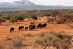 Elephant trek Stock Image