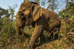 Elephant trek Stock Photo
