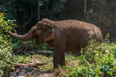 Elephant trek Royalty Free Stock Image