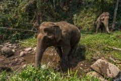 Elephant trek Royalty Free Stock Images