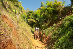 Elephant trekking. In the northern Thailand Stock Photos