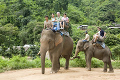 Elephant trekking Stock Image