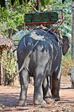 Elephant with trekking bench Stock Photography