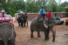 Elephant trekking. In an elephant camp in pattaya Thailand Stock Photos