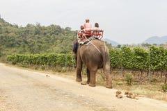 Elephant Trekking. In Hua Hin, Thailand Stock Photo