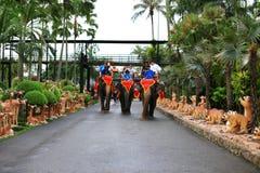 Elephant Trekking. The image of tourist on the elephant in pattaya Thailand Stock Photo