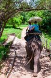 Elephant trekking through jungle in Kanchanaburi, Thailand Royalty Free Stock Photo