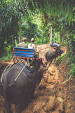 Elephant Trekking Through Jungle in Northern Thailand Stock Photography
