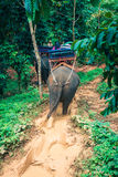 Elephant Trekking Through Jungle in Northern Thailand Stock Images