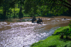 Elephant trekking through jungle in northern Thailand Royalty Free Stock Photography