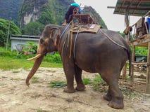 Elephant trekking - Krabi elephant camp Thailand. Elephant trekking in the jungle - departure from the elephant camp Krabi Thailand Stock Image