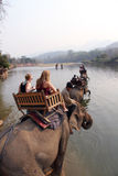 Elephant Trekking in Luang Prabang Laos Royalty Free Stock Images
