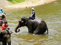 Elephant trekking in northern Thailand Royalty Free Stock Photo