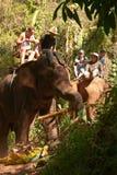 Elephant trekking. Pai jungle, Thailand - FEBRUARY 08: Trekking on February 08, 2011 in Pai Thailand. Tourists on elephant trekking in an elephant camp in Royalty Free Stock Images