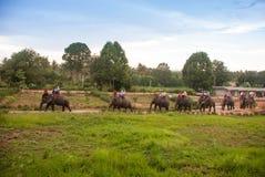 Elephant trekking pattaya Stock Photos