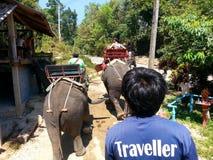 Elephant Trekking, Phuket Thailand Royalty Free Stock Images