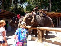 Elephant Trekking, Phuket Thailand Stock Photo