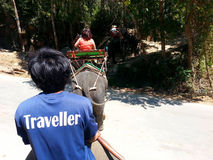 Elephant Trekking, Phuket Thailand Stock Image