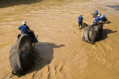 Elephant trekking Stock Photography