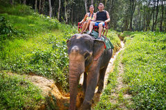 Elephant trekking in Thailand Stock Photography